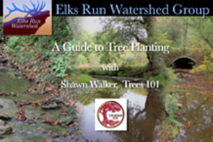 A Guide to Tree Planting (video)