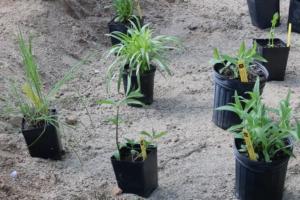 Residential & Community Rain Garden Rebates